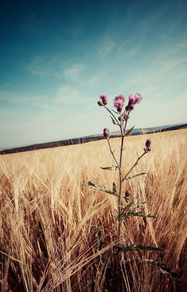 Blumen-im-Sommer